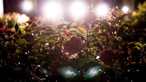 Notturni al Roseto: concerti e dj set alla Reggia di Monza