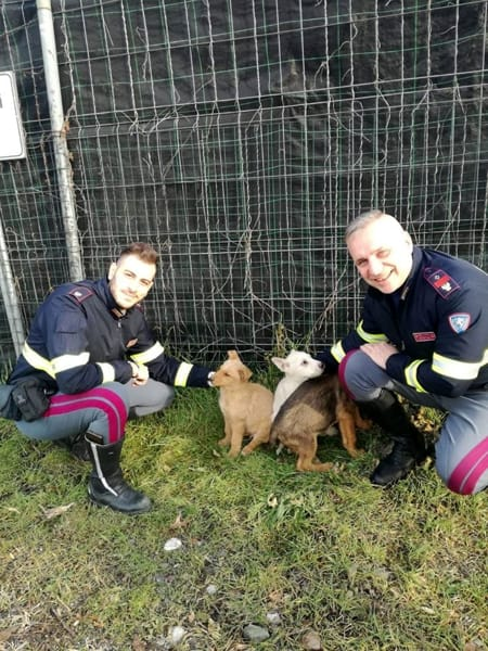 polizia stradale cuccioli-2